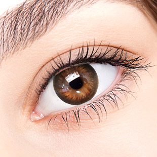 【Yearly / 2 Lenses】 TTI Brown  /209